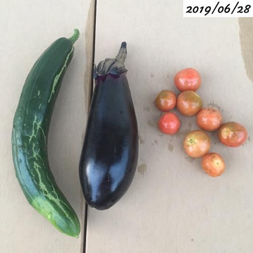 家庭菜園、収穫