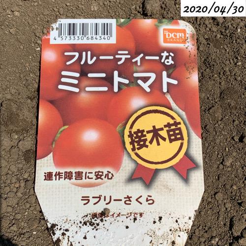 ミニトマト ラブリーさくら
