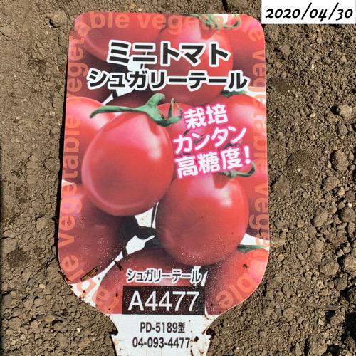 ミニトマト シュガリーテール