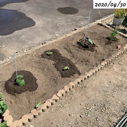 家庭菜園 畑