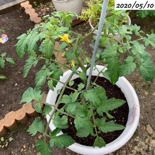 ミニトマトプランター